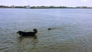 dog river1