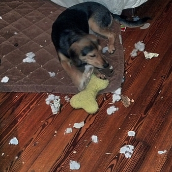 Rupert destruction