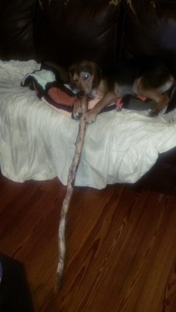 rupert stick